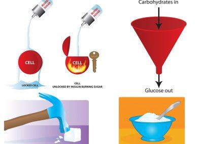 insulin-medical-illustrations